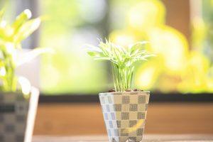 40048122 - foliage plants